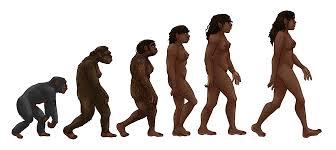 Excursión al Museo de la Evolución Humana